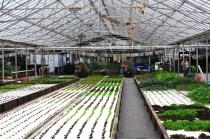 ferme aquaponique