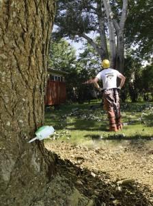 Arborist Large