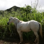 Lahaina Stables - Horseback Riding Tour
