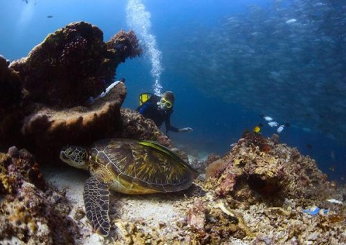 Lanai Scuba Diving - Discover sea turtles