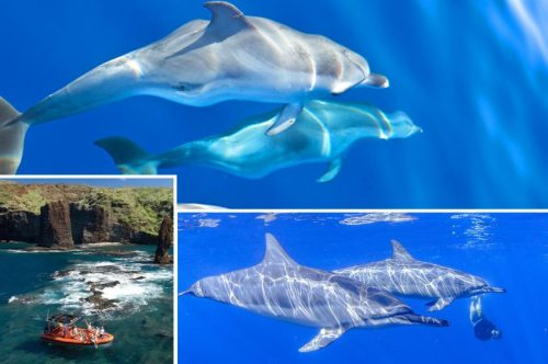 Watch wild dolphin pods on the Ocean Riders Maui Tour