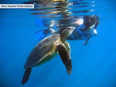 Olowalu kayak tour. Swimming with turtles in Olowalu with Kayak Tour