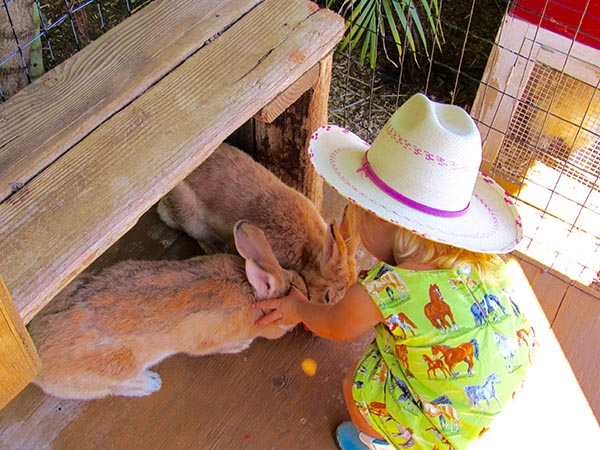 Maui_Toddler_Happy_Trails_Bunny