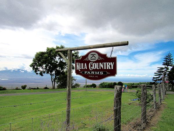 Maui_Toddler_Kula_Farms