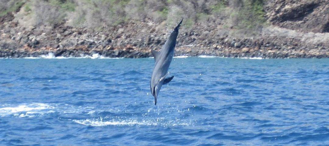 Maui Dolphin Snorkel Tour