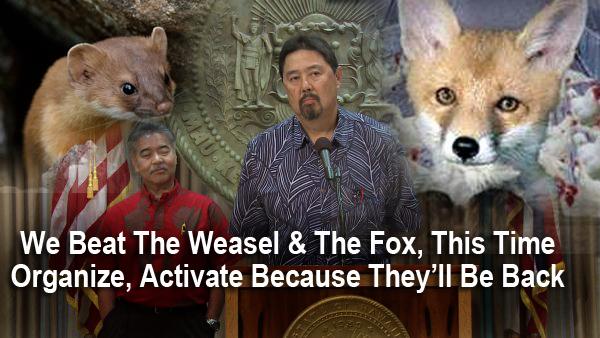 weasel-fox