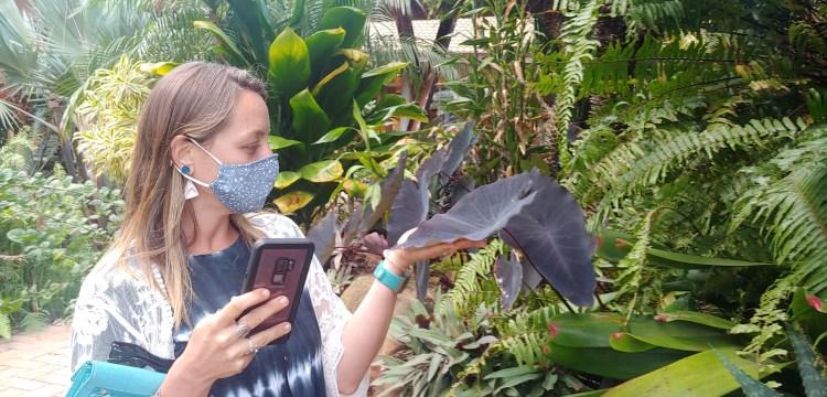 Kayla DeLong admiring purple taro plants at Maui Tropical Plantation in Waikapu, Hawaii