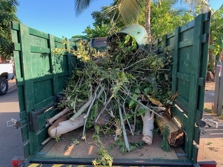 Kihei Green Waste Removal Tree Trimming