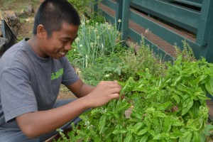 Picking fresh herbs from our garden