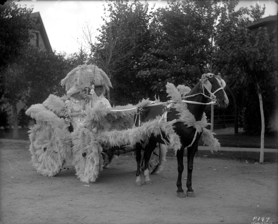 Pampas grass plumes were once so popular they even decorated parade floats