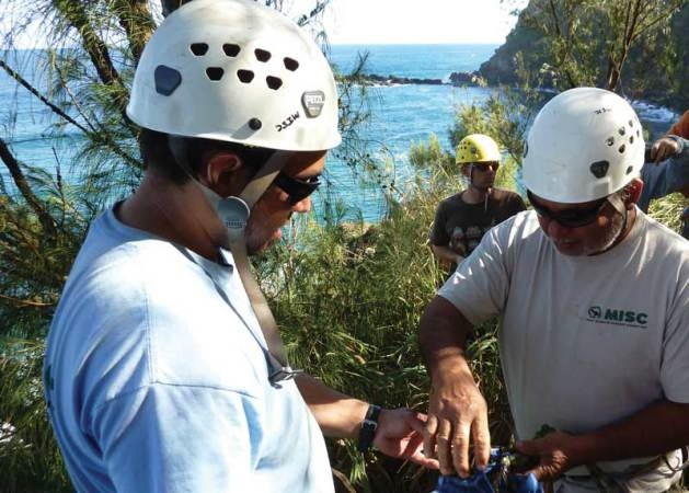 Conservation means jobs and those jobs mean new skills. Kona Ball and Darrell Aquino of MISC prepare to rappel down a cliff while Robert Vincent of East Maui Watershed Partnership looks on.