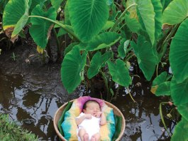 Aloha spirit child taro patch baby