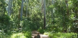 Makawao Forest reserve maui activity