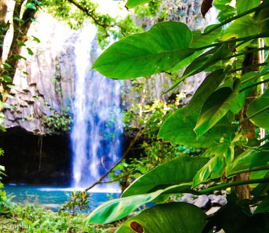 change breath jungle waterfall