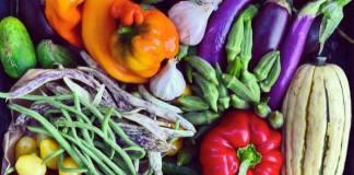 Grow vegetables garden