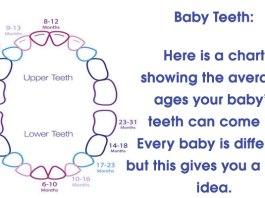baby teeth chart