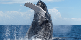Whales Uncle Wayne