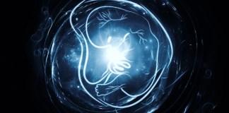 brain development utero