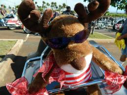 Maui Toys 4 Tots, in support of (24)