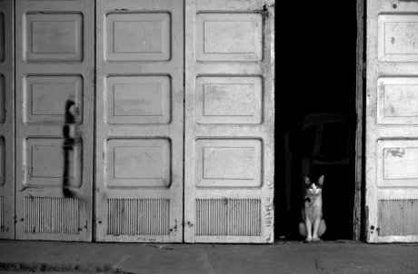 Leandro Bauducco - La Puerta del gato