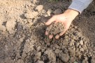 Tekstur tanah Kenjeran