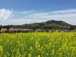 登山初心者にもオススメ!埼玉県飯能方面の日和田山で春登山を楽しもう!