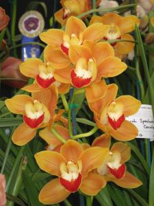 Amazing orchids at the show