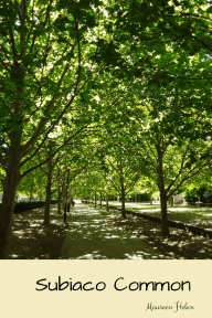 Photo of avenue of oak trees in Subiaco Common