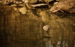 Zen Rock
