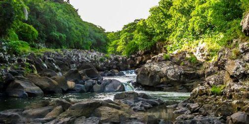 Image result for Black River Gorges National Park
