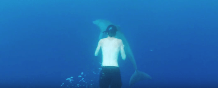 swim_with_dolphin_Black_River