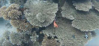 Beautiful corals seen during snorkeling at Ile aux cerfs