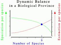Roz 1 Dynamic Balance