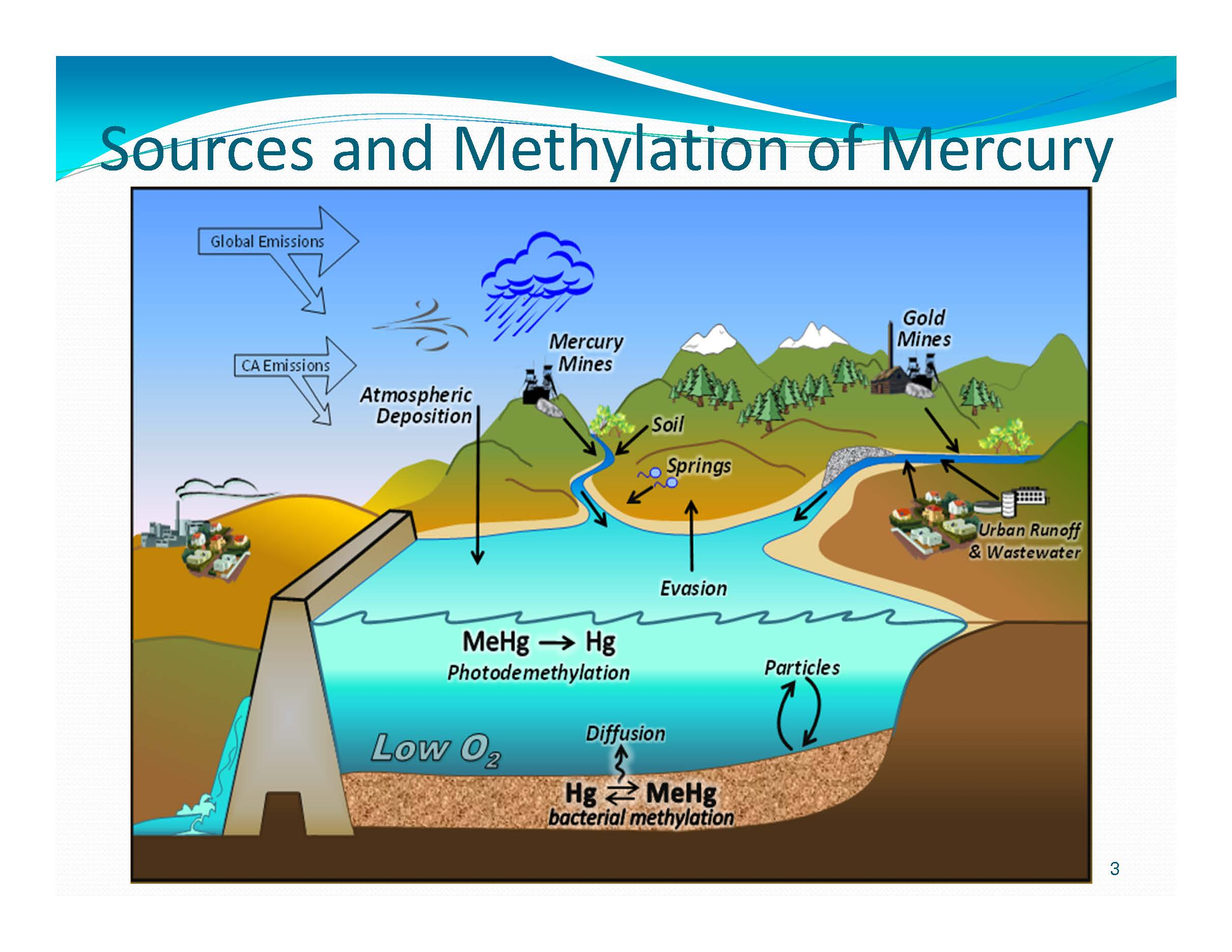 A methylmercury update from the state water board maven for Where does mercury in fish come from