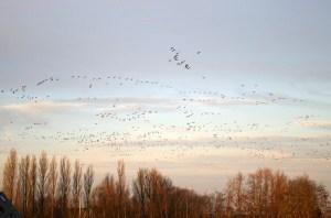 birds_flying BOR