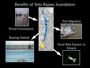 Benefits of floodplain inundation
