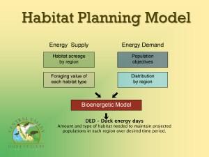 Bioenergetic model