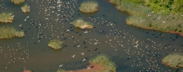 Wetland birds sliderbox
