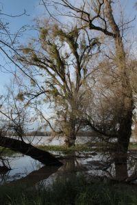 Sacramento River at the Fremont Weir Mar 2011 #19