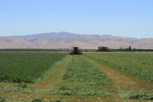 Alfalfa cutting, Central Valley, July 2013 #1