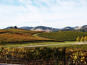 Foothills and vineyards by Kristin Wall