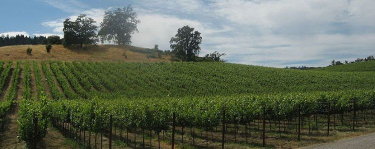 Vineyards_in_Russian_River,_Sonoma