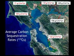 4-Callaway.carbon sequestration.05.2015_Page_12