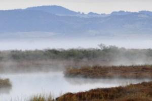 San Pablo Bay marsh (photo by USFWS)