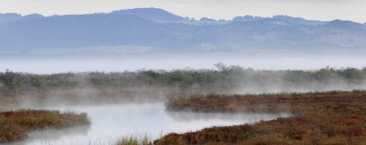 San Pablo Bay Marsh by USFWS Sliderbox
