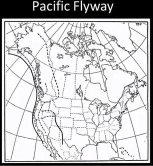 17 Pacific Flyway