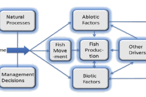 Flows and fishes table 2 Sliderbox