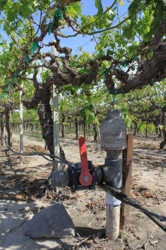 Coachella Valley drip irrigation