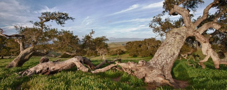 Fort Ord by BLM