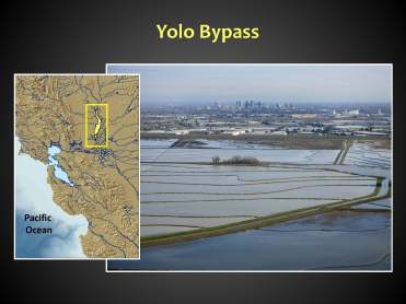 Yolo Bypass BB_Page_06